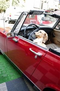滋賀での車庫証明・名義変更、車に関することならおまかせください